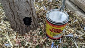 Seal the wound with tree wound sealant